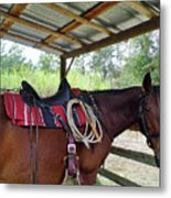Florida Cracker Horse Metal Print