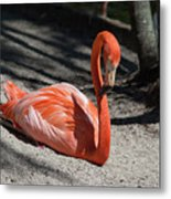 Florida Flamingo Metal Print