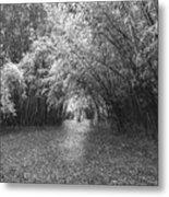 Florida Garden Scene_011 Metal Print