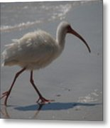 Florida Ibis 3 Metal Print