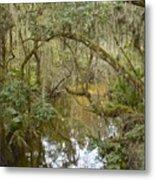 Florida Jungle Metal Print