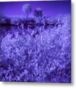 Florida Lagoon In Ir Metal Print