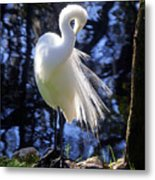 Florida Living Metal Print