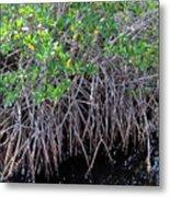 Florida - Mangroves Metal Print