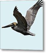 Florida Pelican In Flight Metal Print