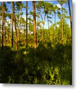 Florida Pine Forest Metal Print