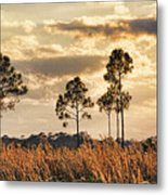 Florida Pine Landscape By H H Photography Of Florida Metal Print
