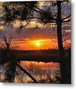 Florida Pine Sunset Metal Print