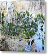 Florida Pond Metal Print