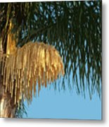 Florida Queen Palm Flower   Metal Print