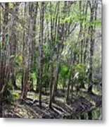 Florida Riverbank  Metal Print