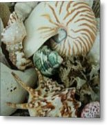 Florida Sea Shells Metal Print