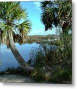 Florida Shade Trees Metal Print