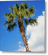 Florida State Tree Metal Print