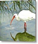 Florida Stork Metal Print