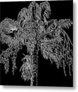 Florida Thatch Palm In Black And White Metal Print