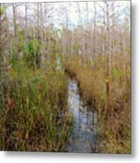 Florida Trail Big Cypress Metal Print