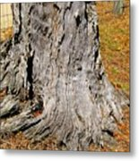 Florida Tree Stump Metal Print