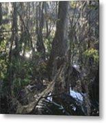 Florida Winter Metal Print