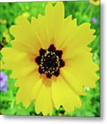 Florida - Yellow - Wildflower Metal Print