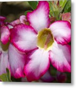 Flower 12 Pink White Yellow Metal Print