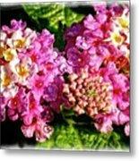 Flower 23f, Ny, 16 Metal Print