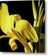 Flower 29f, Ny, 16 Metal Print