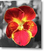 Flower 5 - Reverse Black And White Metal Print