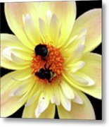 Flower And Bees Metal Print