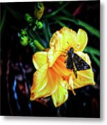 Flower And Butterfly Metal Print