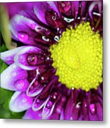 Flower And Droplets Metal Print