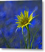 Flower And Flax Metal Print