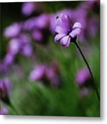 Flower And Fly Metal Print