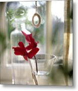 Flower And Window Metal Print