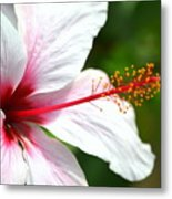 Flower Beauty Metal Print by Riad Belhimer