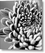 Flower Black And White Metal Print