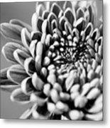 Flower Black And White Metal Print