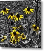 Flower Black Eyed Susan Metal Print
