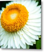 Flower Blossom 3 Metal Print