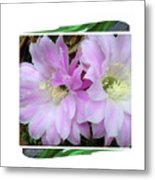 Flower Blossom Pink Metal Print
