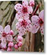 Flower Blossoms Pink Tree Blossoms Art Print Giclee Spring Flowers Metal Print
