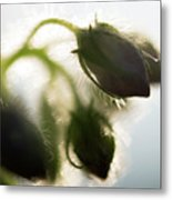 Flower Buds Abstract Metal Print