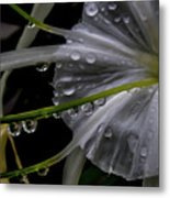 Flower Close Up Metal Print
