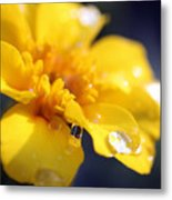Flower Droplets Metal Print
