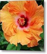 Flower Explosion2 Metal Print