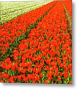 Flower Farm 2 Metal Print