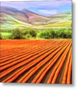 Flower Field Near Los Osos Metal Print