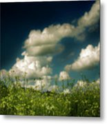 Flower Fields By Roadside Metal Print
