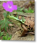 Flower, Frog, Fly Metal Print