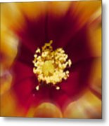 Flower Graphic Metal Print